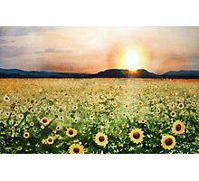 Sunflower Splatters Photographic Print