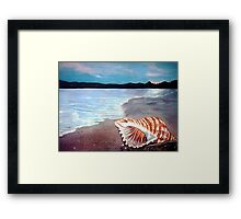 Seashell  Framed Print