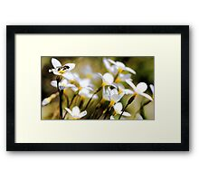 But, It's Getting Late .... Framed Print