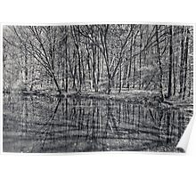 reflection of trees Poster