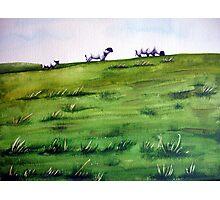 Sheep Sprinkles Photographic Print