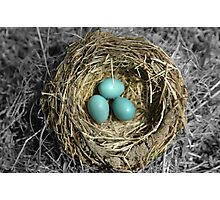 Birds Nest with Eggs Photographic Print