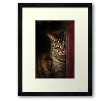 La Gatta Kicia Framed Print