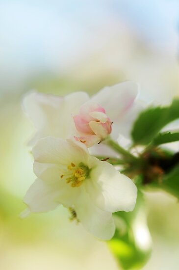 Blossom by Rosy Kueng