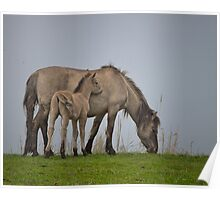 A foal with its dam. Poster