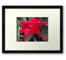 Right Red Flower Framed Print