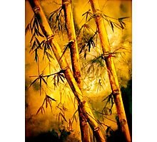 Tropics.. Heat and Old Bamboo Photographic Print