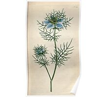 The Botanical magazine, or, Flower garden displayed by William Curtis V1 V2 1787 1789 0050 Nigella Damascena, Garden Fennel Flower, Love in a Mist, Devil in a Bush Poster