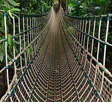 Into The Jungle by Alexandra Lavizzari