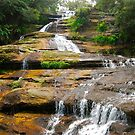 Katoomba Cascades by Penny Smith