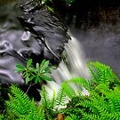 SPACKMANS FALLS SUMMER by MIKESANDY