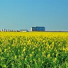 Canola Country by peasticks