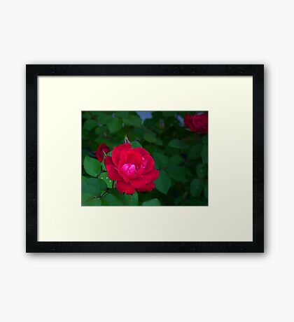 """""""Who Doesn't Love A Beautiful Knockout"""" Framed Print"""