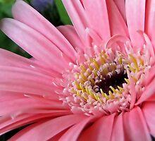 Pink Charm by Sviatlana