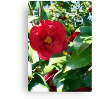 Bright and Bold Canvas Print