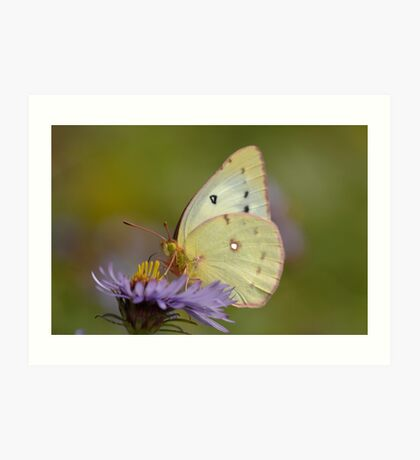 White butterfly and flower Art Print