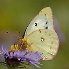White butterfly and flower by creativegenious