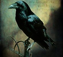 Tower of London raven by hartpix