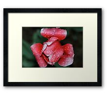 Pink for Breast Cancer Awareness (Tulip) Framed Print