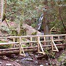 Coal Creek Falls and Foot Bridge by Stacey Lynn Payne