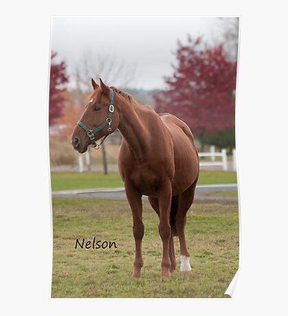 Nelson - NNEP Ottawa ON Poster