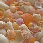 I ♥ Shells by Pamela McCreight