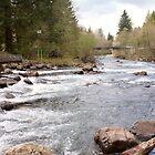 Cedar River Kayak Slalom Course by Stacey Lynn Payne