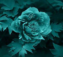 Peony in Blue by Sandy Keeton