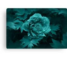 Peony in Blue Canvas Print