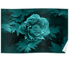 Peony in Blue Poster
