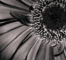 B&W Flower w/red tone by Sean Napier