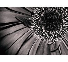 B&W Flower w/red tone Photographic Print