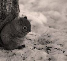 brrrr....frickn' Cold! by JamesA1