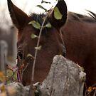 Cedar - NNEP Ottawa, ON by Tracey  Dryka