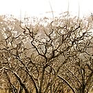 Dormant Orchards by Carl LaCasse