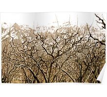 Dormant Orchards Poster