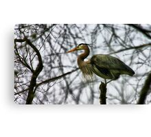 Guard Bird Canvas Print