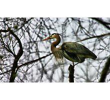 Guard Bird Photographic Print