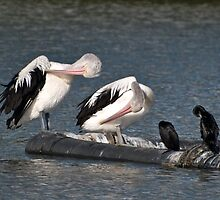 Copycats at Pelican lodge. by johnrf