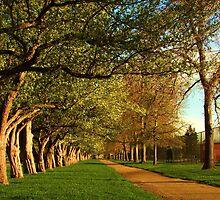Spring Walkway by Thomas Stevens