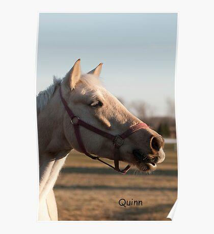 Quinn - NNEP Ottawa ON Poster