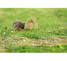 Nibbling that Itch Photographic Print