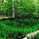 Wild Frog Pond,  for Jeffee  ~ IT'S A WILD THANG!!! by NatureGreeting Cards ©ccwri
