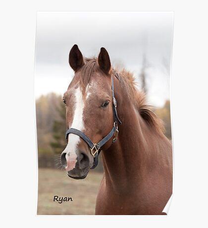Ryan - NNEP Ottawa, ON (portrait) Poster