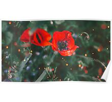 Red Poppies Faery Lanterns Poster