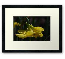 A Spring bulb bow. Framed Print