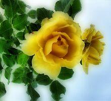 yellow rose by Bettysplace