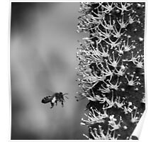 grass-tree flower spike Poster