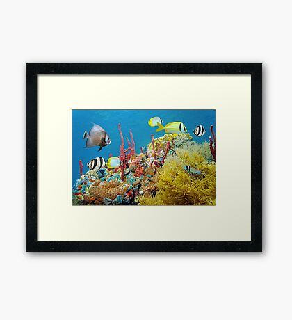 Colorful underwater marine life in a coral reef Framed Print