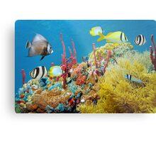 Colorful underwater marine life in a coral reef Metal Print